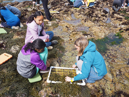 Students from the education program working in the tidepools